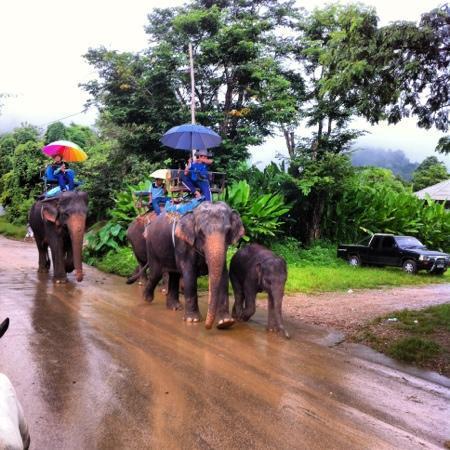 Ping Nakara Boutique Hotel & Spa: elephant rides