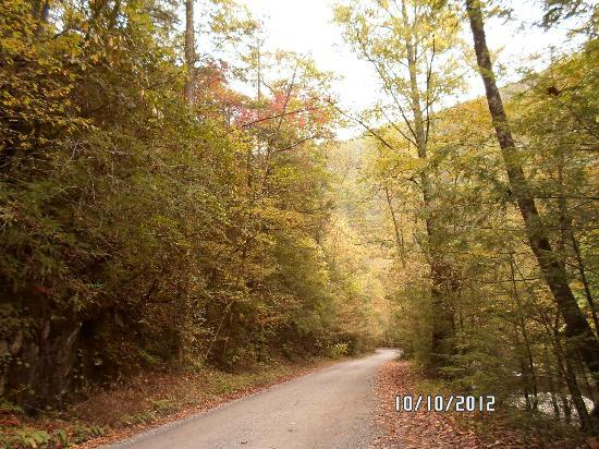 Upper Tremont Road in Great Smoky Mountains National Park : Fall colors
