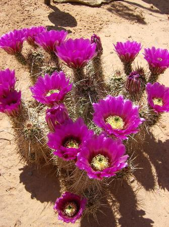 Dreamkatchers Lake Powell Bed & Breakfast: cactus in May
