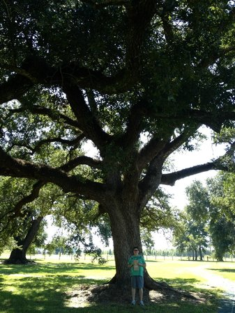 Cane River Creole National Historical Park: Trees