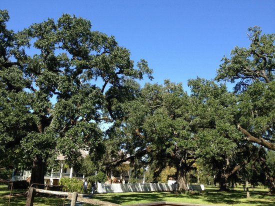 Cane River Creole National Historical Park: 200+ year old trees