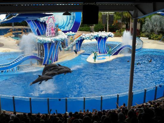 SeaWorld Orlando : Golfinhos no final da apresentação, quando um bando de araras sobrevoa o público. Perfeito!