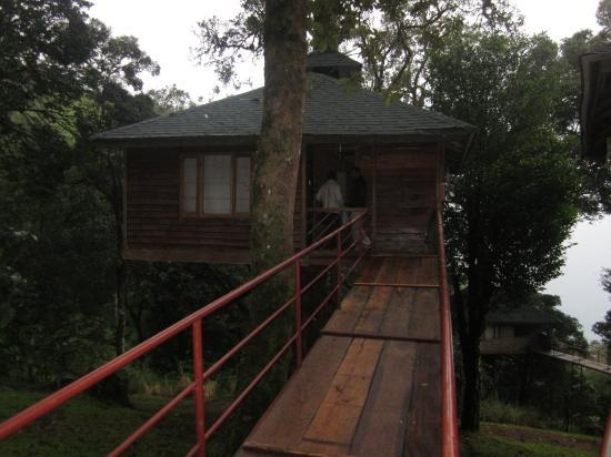 Nature Zone Resort: our tree house