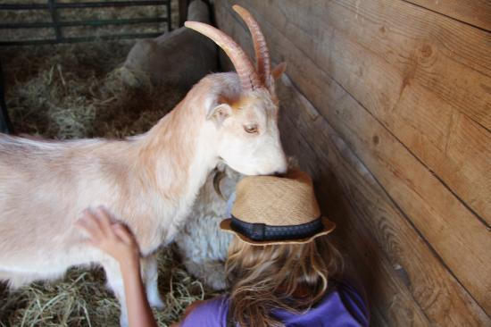 Farm Sanctuary: Trying to get my hat :)