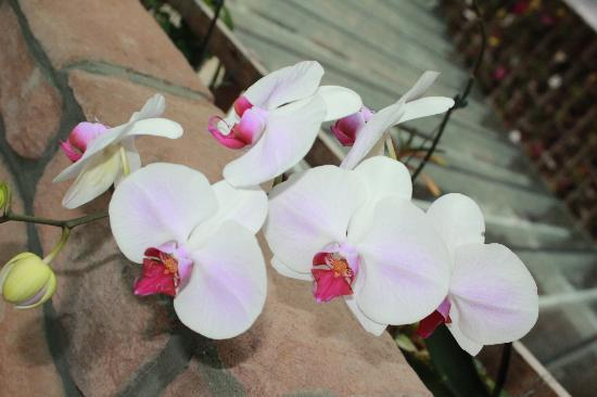 The Chateau Spa & Organic Wellness Resort: orchid