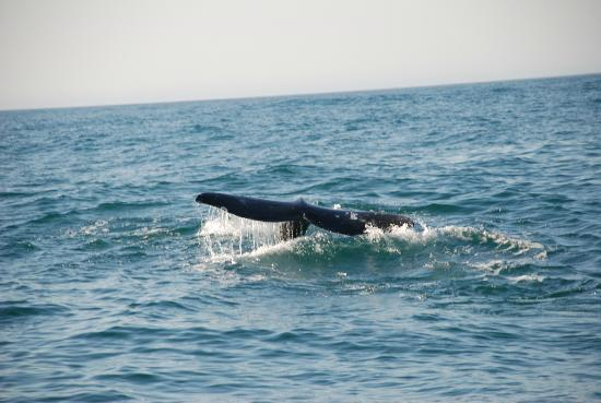 Whale Research EcoExcursions: une baleine