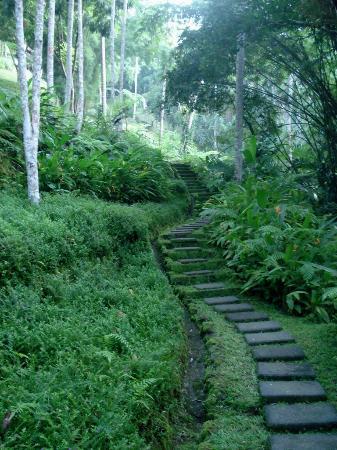 COMO Shambhala Estate: lush walking path