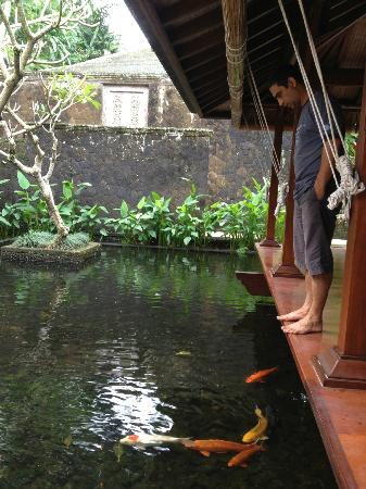 ‪‪COMO Shambhala Estate, Bali‬: Koi pond