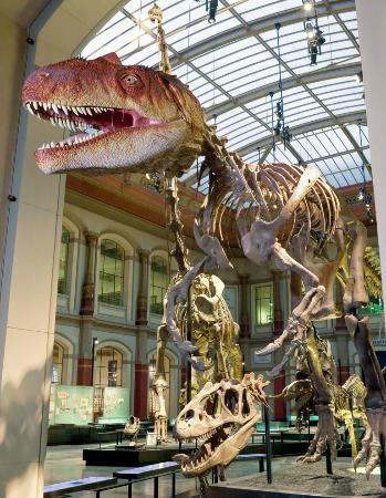 Museum Fur Naturkunde