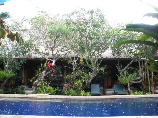 Sanur Beach Villas: Raindrops on the pool
