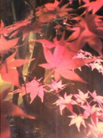 Hondo-ji Temple: 紅葉も最高