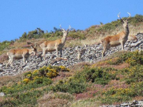 Experience Exmoor: Exciting encounters with the wildlife on Exmoor.