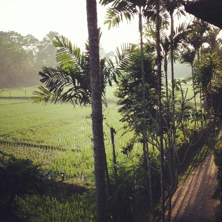 Saren Indah Hotel: Early morning view