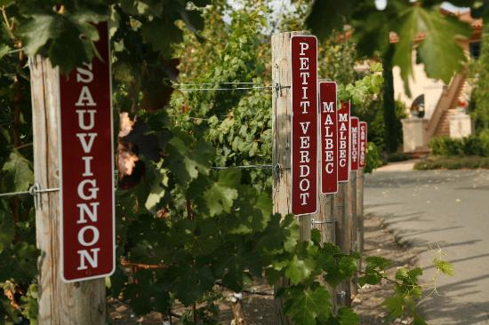 Bennett Lane Winery: Petting Vineyard