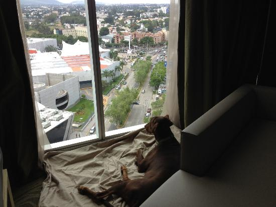The Westin Guadalajara: Duncan enjoying the view