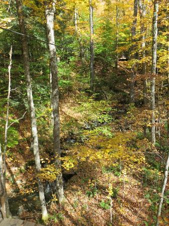 ArborTrek Canopy Adventures: One of the zips