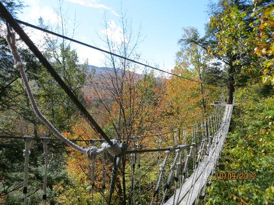 ArborTrek Canopy Adventures: Draw Bridge