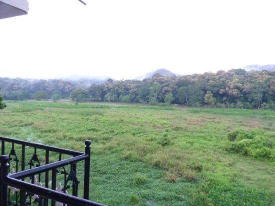 Jungle Palace Homestay: after rain