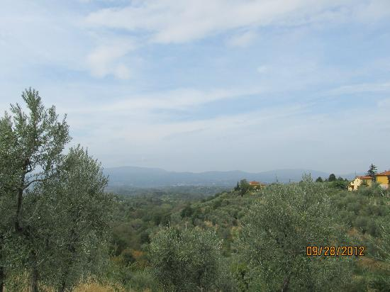 Scenic wine tours in Tuscany: Tuscan hills