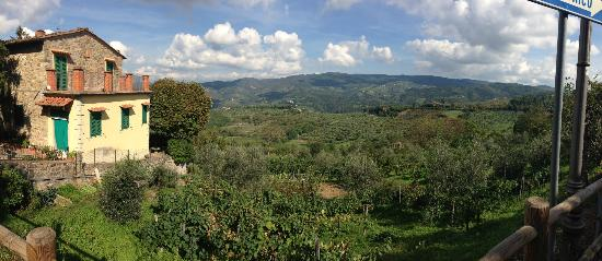 Tuscan Wine Tours with Angie: A beautiful view of Tuscan countryside