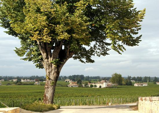 Le Relais de Franc Mayne: View from the driveway overlooking the vineyards.