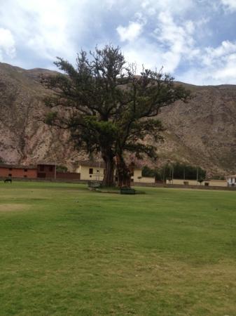 Sonesta Posadas del Inca Yucay: árbol frente al hotel.
