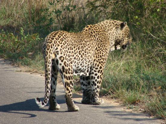 [Image: nhongo-safaris-day-tours.jpg]