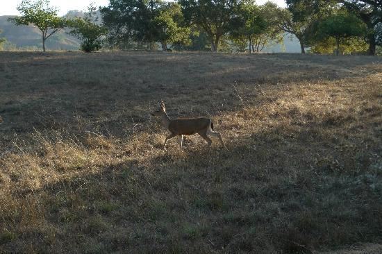 Post Ranch Inn: Like a Disney movie; deer on the grounds