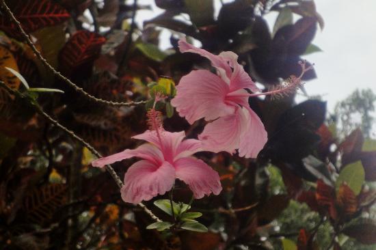 Cabinas Iguana: Jardins