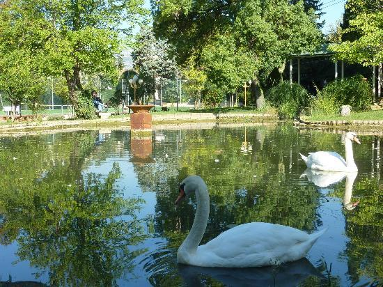 Swans at the Hostellerie de la Source