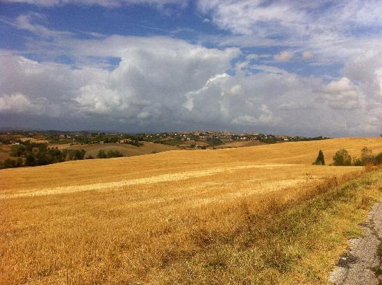 Agriturismo La Collina: Panorama