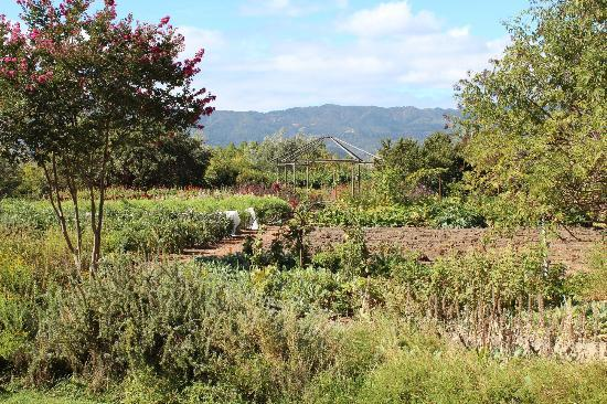 Frog's Leap Winery : The Garden