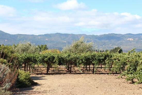 Frog's Leap Winery : Great View!