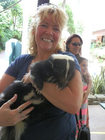 Sarasota Jungle Gardens: Me holding Oreo the Skunk