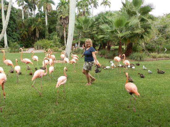 Me With The Flamingo 39 S Picture Of Sarasota Jungle Gardens Sarasota Tripadvisor