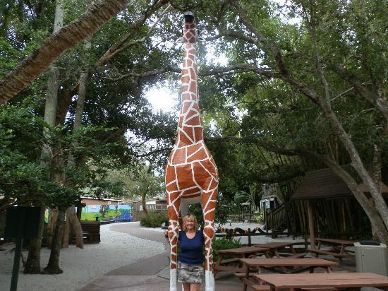 Sarasota Jungle Gardens: Giraffe Sculpture
