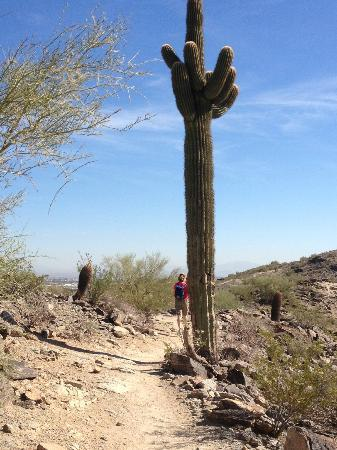 Arizona-Sonora Desert Museum: lovely
