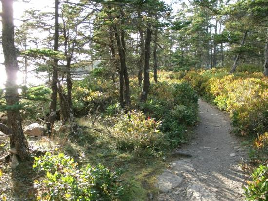 Ship Harbor Nature Trail: Path along the coast's edge