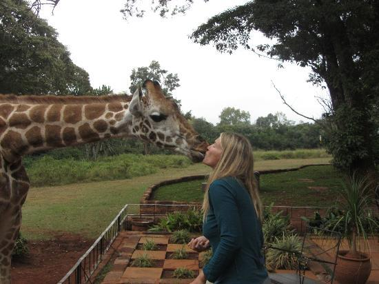 Giraffe Manor: kisses anyone?