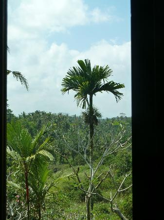 Alam Indah: Through the window