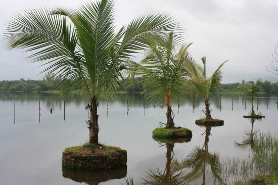 Pooja Farms: river kundalika