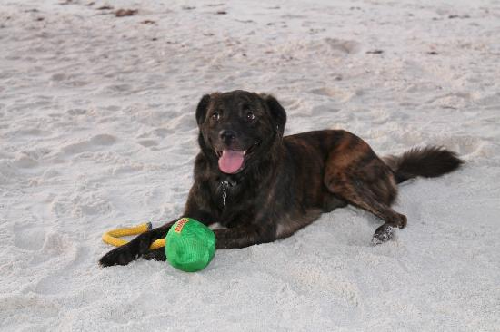 Carillon Beach Resort Inn: DOG FRIENDLY!