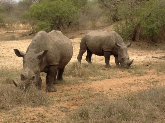 Monwana Game Lodge: with Rhino