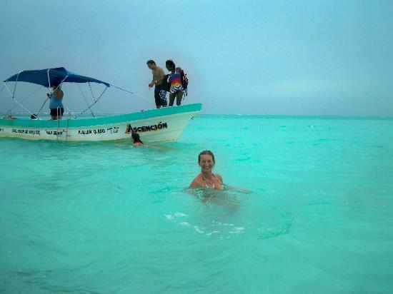 D part pour les requins baleine photo de les tours de mimi playa del carmen tripadvisor - Le blog de mimi ...