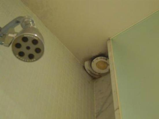 Maxime Boutique Hotel & Restaurant: Mold in shower vent