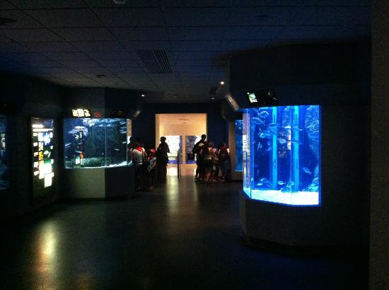 Aquarium de Biarritz: First room