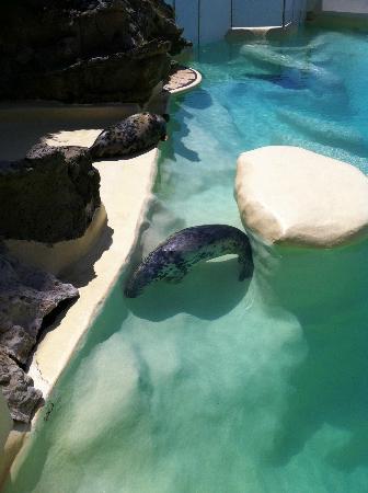 Musee de la Mer de Biarritz: Seals 