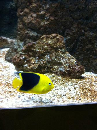 Aquarium de Biarritz: Fish