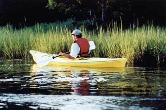 Harbor Island, SC: Kayak rentals for that once in a lifetime experience!!