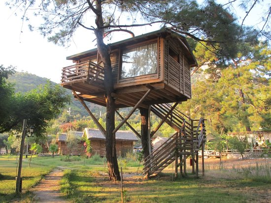 Sea Valley Bungalows: treehouse